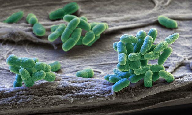 Betegséget okozó baktériumot találtak ezen a magyar fürdőhelyen, azonnal elrendelték a tilalmat