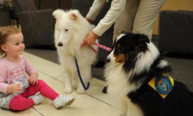 Terápiás kutyusok gyógyítják a gyerekeket