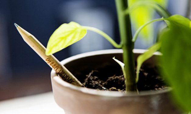Így táncolnak a növények, amíg nem vagyunk otthon
