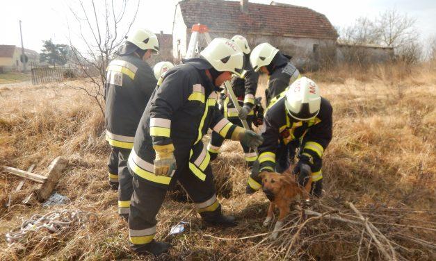 Elképesztő, mit tettek egy kiskutyával a magyar tűzoltók