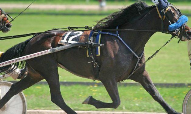 Agyrázkódás és végtagtörések: újabb részletek a szajoli fogathajtó versenyen történt incidensről – Egy gyermek is megsebesült a lovak miatt