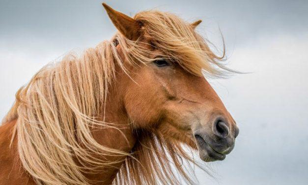 Még több Tetris challenge! Most egy ló is kiterült a kihívás kedvéért – fotó