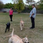 Hárommillió forintot ér egy vakvezető kutya