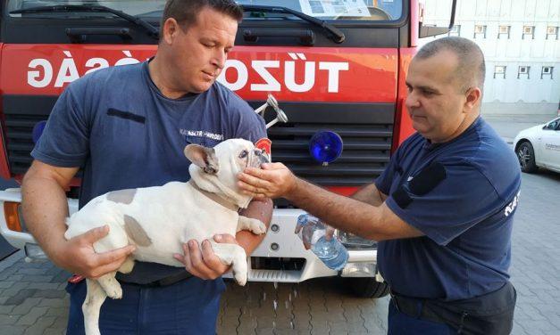 A kecskeméti tűzoltók segítettek hazajutni az otthonról elszökött Pocaknak
