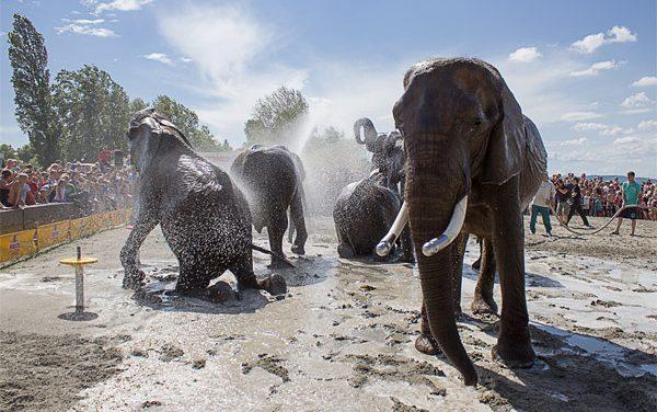 Strandolnak az elefántok