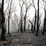 Tűzvész a magyar erdőkben: szinte hihetetlen, hány ilyen eset van évente