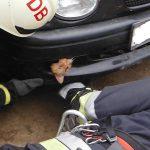 Lökhárítóba szorult cicát mentettek a hajdú-bihari tűzoltók