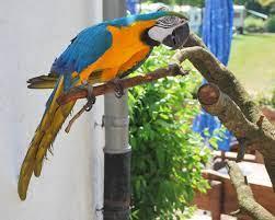 Sztár lett a brit kisváros papagája, aki minden arra járót megszégyenít