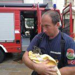 Csatornába esett kiscicákat mentettek a fővárosi tűzoltók