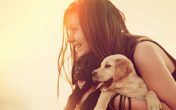 Csányi Vilmos: A kutya még nemember, de már nem is állat